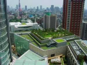 green-roof1-300x225